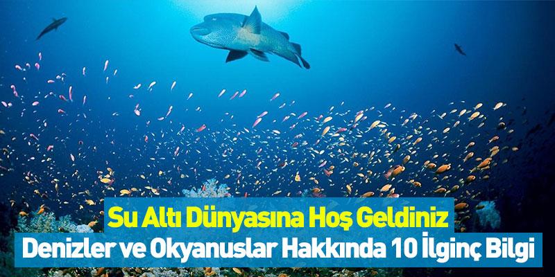 Su Altı Dünyasına Hoş Geldiniz! Denizler ve Okyanuslar Hakkında 10 İlginç Bilgi
