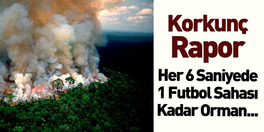 Dünya Kaynakları Enstitüsü Yok Olan Orman Raporunu Yayımladı