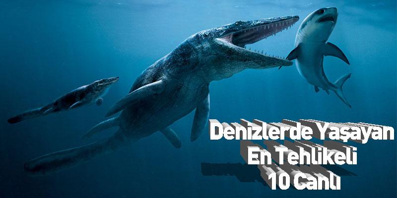 Denizlerde Yaşayan En Tehlikeli 10 Canlı
