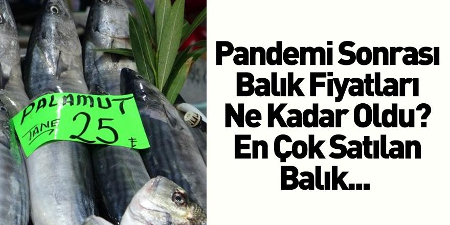 Pandemi Süreci Sonrası Balık Fiyatları Ne Kadar Oldu?