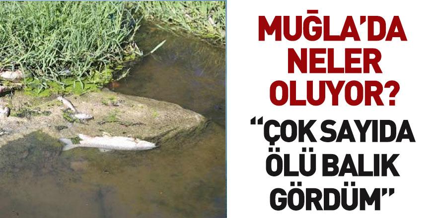 Muğla Yatağan Çayı'nda Toplu Balık Ölümleri Gerçekleşti