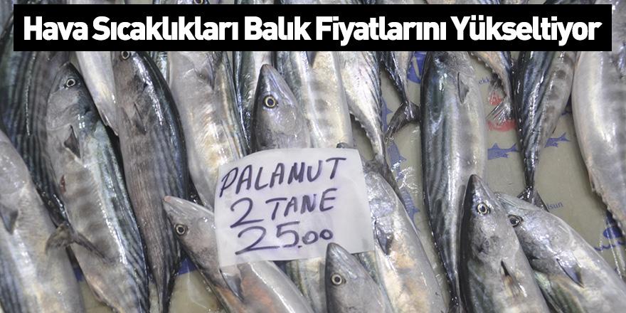 Hava Sıcaklıkları Balık Fiyatlarını Yükseltiyor