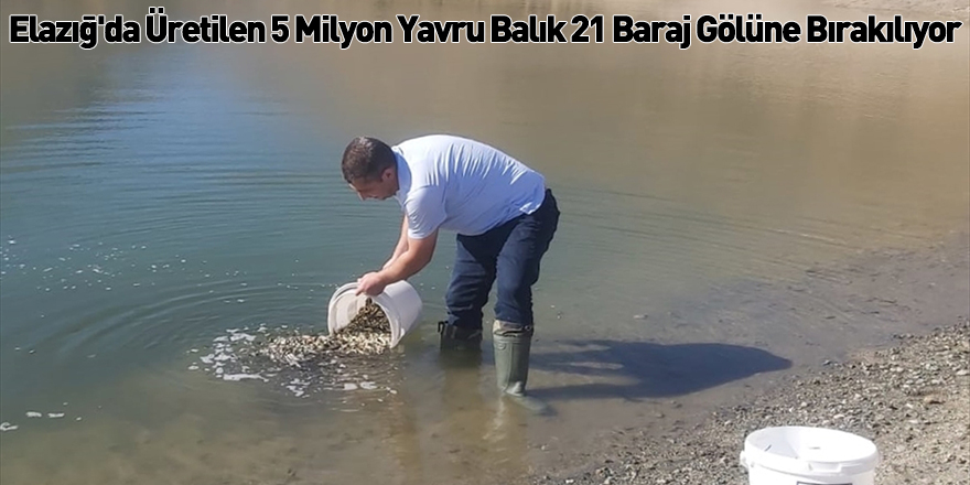 Elazığ'da Üretilen 5 Milyon Yavru Balık 21 Baraj Gölüne Bırakılıyor