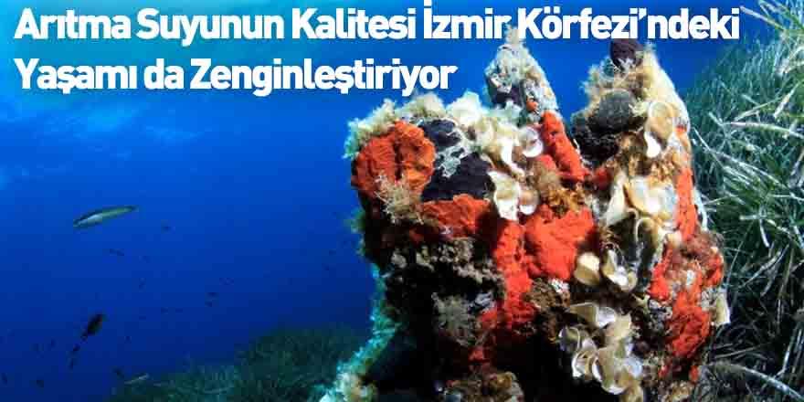 Arıtma Suyunun Kalitesi İzmir Körfezi'ndeki  Yaşamı da Zenginleştiriyor