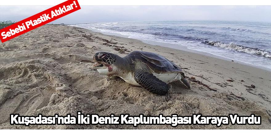 Kuşadası'nda İki Deniz Kaplumbağası Karaya Vurdu