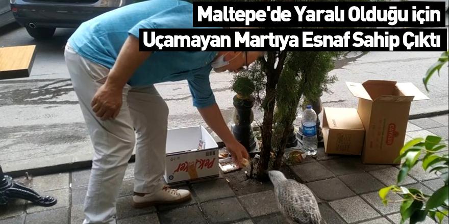 Maltepe'de Yaralı Olduğu İçin Uçamayan Martıya Esnaf Sahip Çıktı