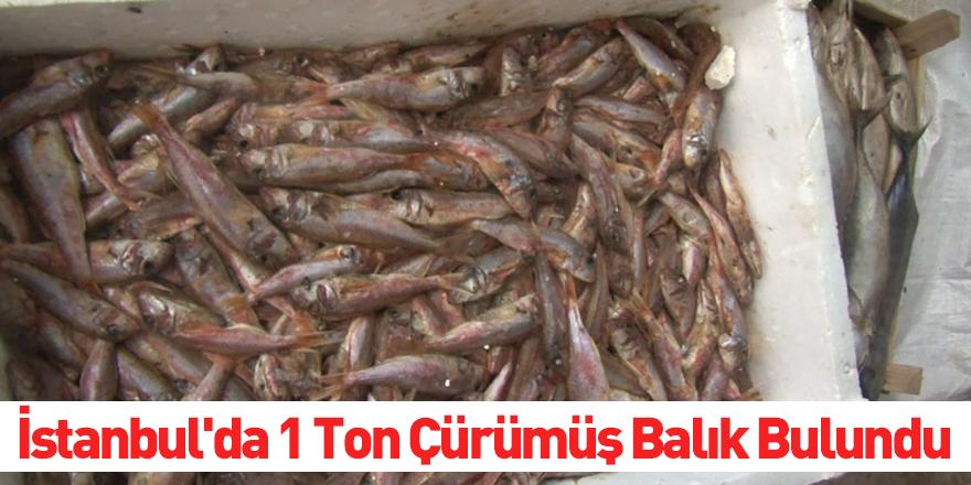 İstanbul'da 1 Ton Çürümüş Balık Bulundu