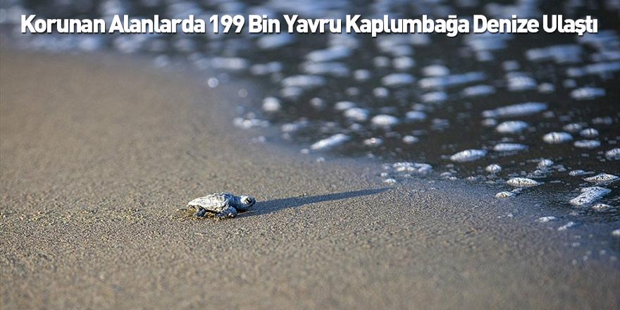 Korunan Alanlarda 199 Bin Yavru Kaplumbağa Denize Ulaştı