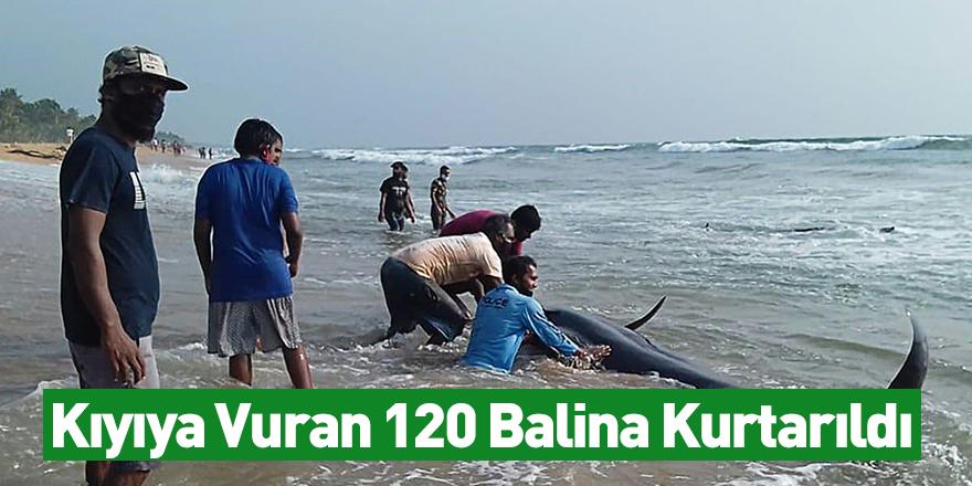 Kıyıya Vuran 120 Balina Kurtarıldı