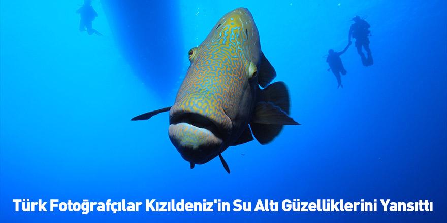 Türk Fotoğrafçılar Kızıldeniz'in Su Altı Güzelliklerini Yansıttı