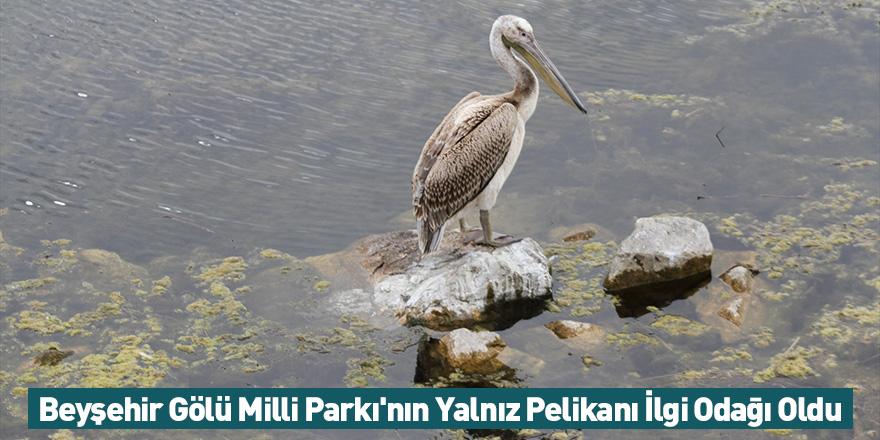 Beyşehir Gölü Milli Parkı'nın Yalnız Pelikanı İlgi Odağı Oldu
