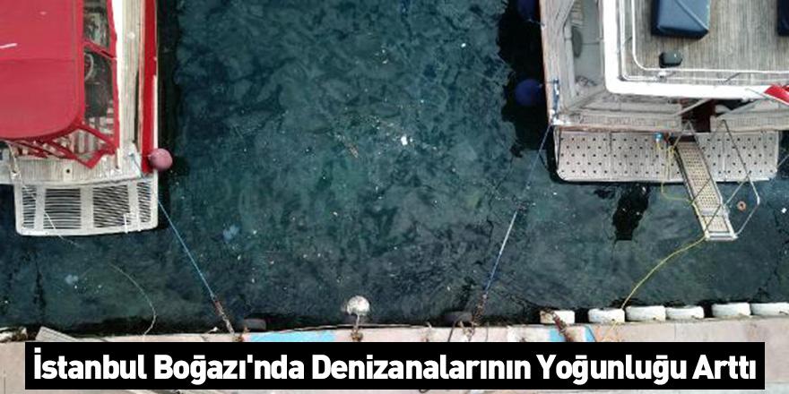 İstanbul Boğazı'nda Denizanalarının Yoğunluğu Arttı