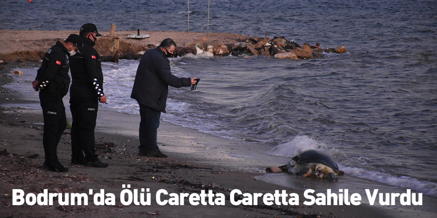 Bodrum'da Ölü Caretta Caretta Sahile Vurdu