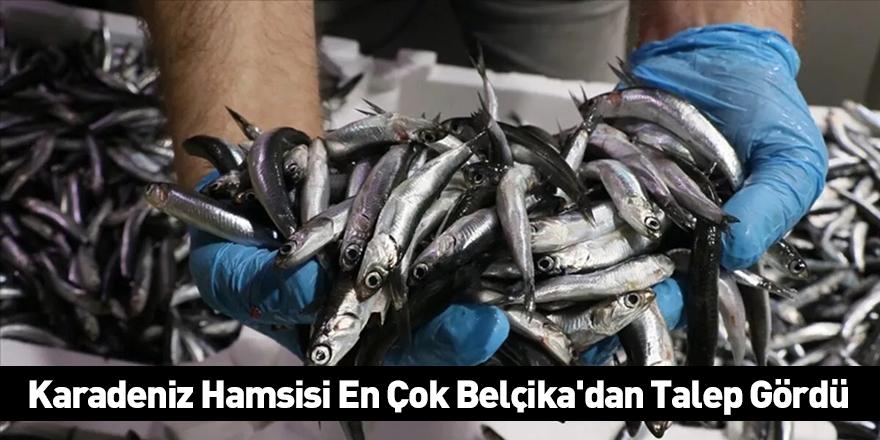 Karadeniz Hamsisi En Çok Belçika'dan Talep Gördü