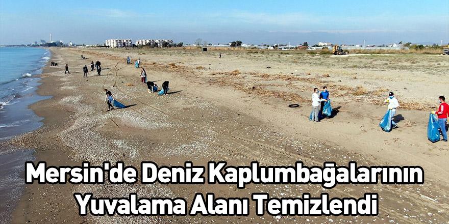 Mersin'de Deniz Kaplumbağalarının Yuvalama Alanı Temizlendi