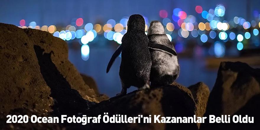 2020 Ocean Fotoğraf Ödülleri'ni Kazananlar Belli Oldu