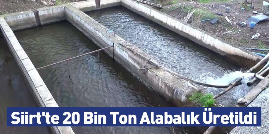 Siirt'te 20 Bin Ton Alabalık Üretildi