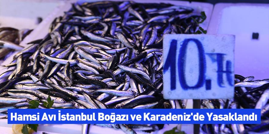 Hamsi Avı İstanbul Boğazı ve Karadeniz'de Yasaklandı