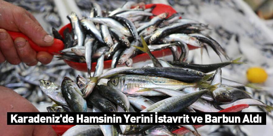 Karadeniz'de Hamsinin Yerini İstavrit ve Barbun Aldı