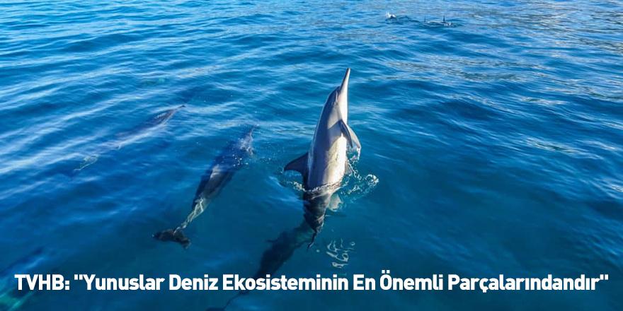 """TVHB: """"Yunuslar Deniz Ekosisteminin En Önemli Parçalarındandır"""""""