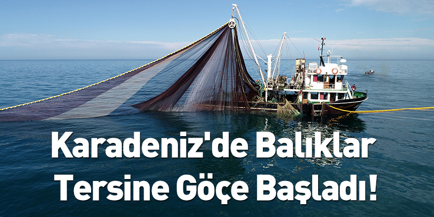 Karadeniz'de Balıklar Tersine Göçe Başladı!