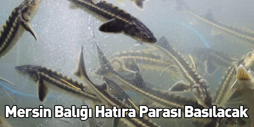 Mersin Balığı Hatıra Parası Basılacak