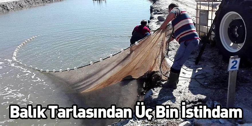 Balık Tarlasından Üç Bin İstihdam