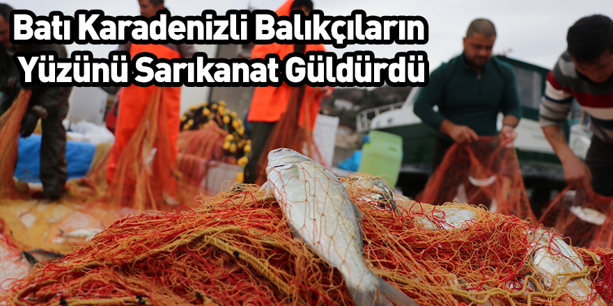 Batı Karadenizli Balıkçıların Yüzünü Sarıkanat Güldürdü