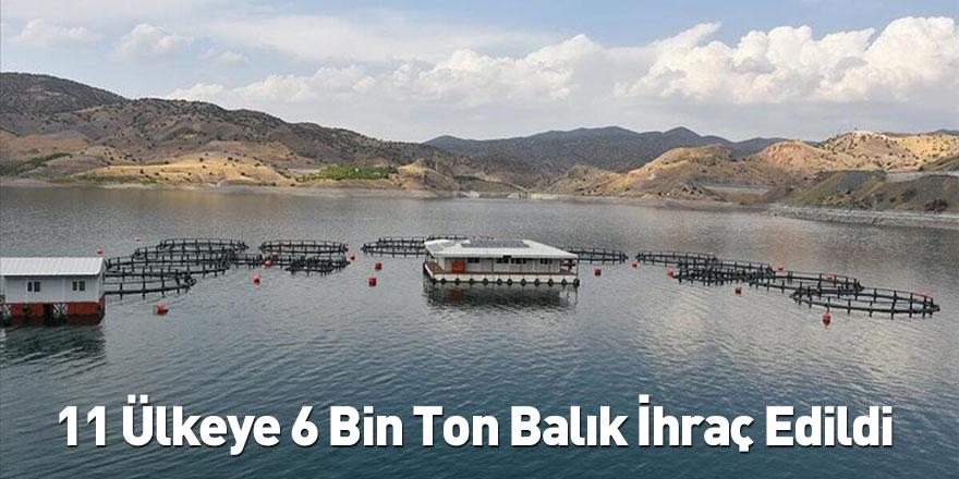 11 Ülkeye 6 Bin Ton Balık İhraç Edildi