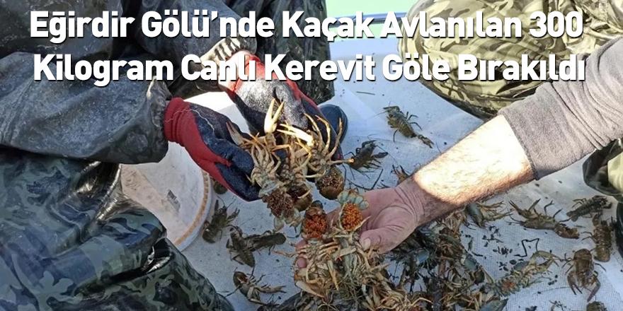 Eğirdir Gölü'nde Kaçak Avlanılan 300 Kilogram Canlı Kerevit Göle Bırakıldı
