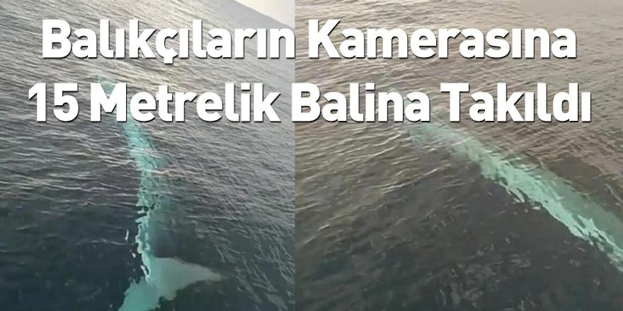 Balıkçıların Kamerasına 15 Metrelik Balina Takıldı