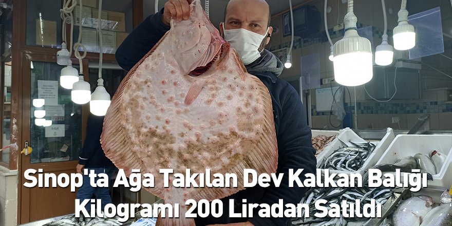 Sinop'ta Ağa Takılan Dev Kalkan Balığı Kilogramı 200 Liradan Satıldı