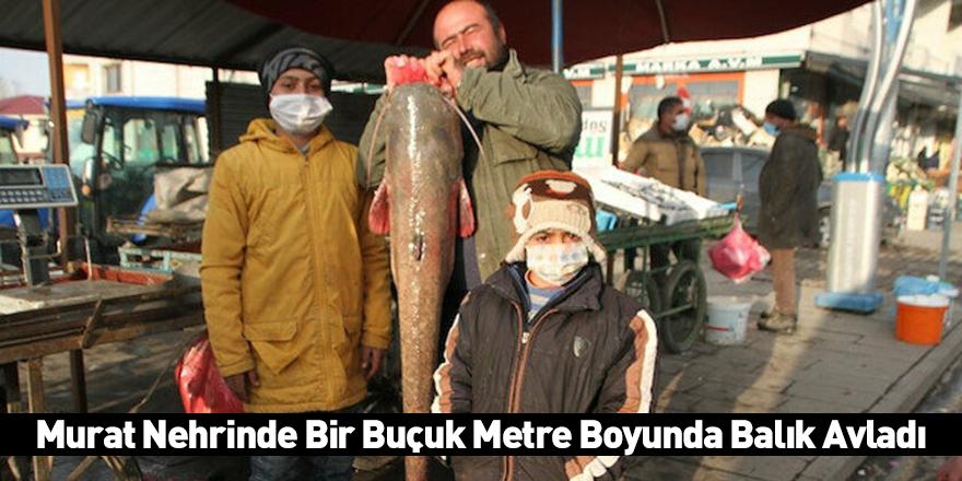 Murat Nehrinde Bir Buçuk Metre Boyunda Balık Avladı