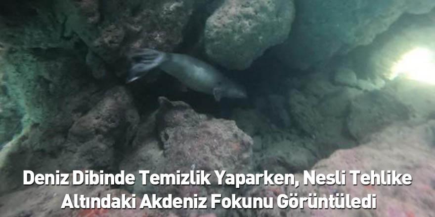 Deniz Dibinde Temizlik Yaparken, Nesli Tehlike Altındaki Akdeniz Fokunu Görüntüledi