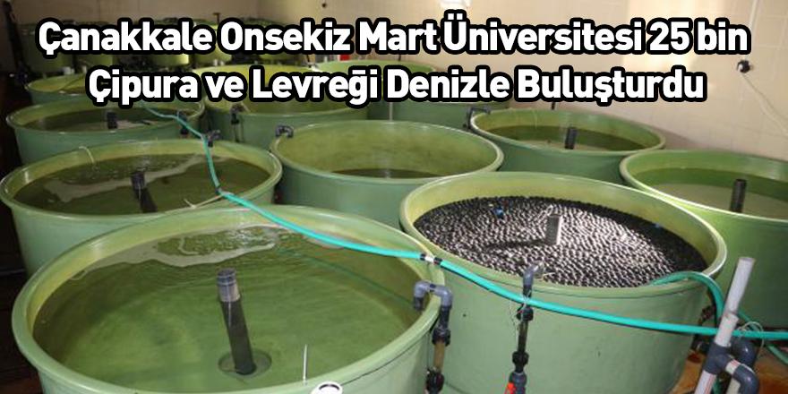Çanakkale Onsekiz Mart Üniversitesi 25 bin Çipura ve Levreği Denizle Buluşturdu