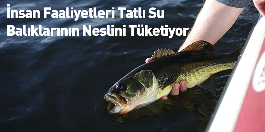 İnsan Faaliyetleri Tatlı Su Balıklarının Neslini Tüketiyor
