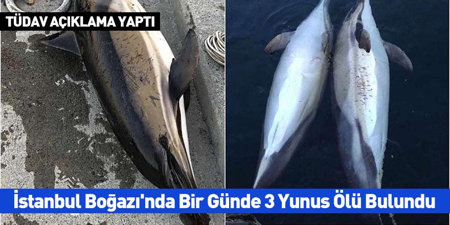 İstanbul Boğazı'nda 1 Günde 3 Yunus Ölü Bulundu