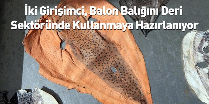 İki Girişimci, Balon Balığını Deri Sektöründe Kullanmaya Hazırlanıyor