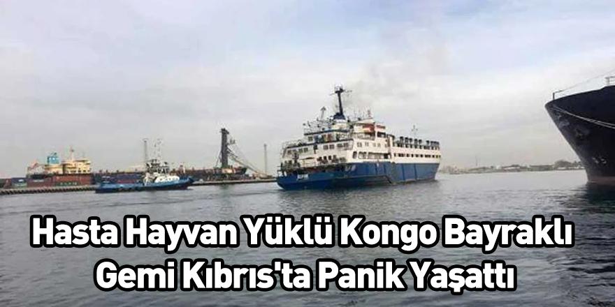 Hasta Hayvan Yüklü Kongo Bayraklı Gemi Kıbrıs'ta Panik Yaşattı