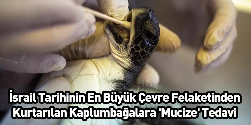 İsrail Tarihinin En Büyük Çevre Felaketinden Kurtarılan Kaplumbağalara 'Mucize' Tedavi