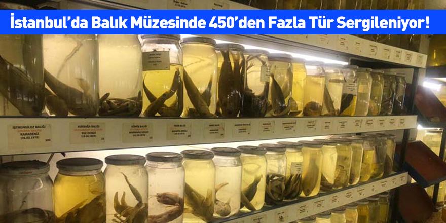 İstanbul'da Balık Müzesinde 450'den Fazla Tür Sergileniyor!