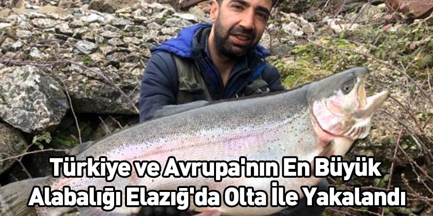 Türkiye ve Avrupa'nın En Büyük Alabalığı Elazığ'da Olta İle Yakalandı