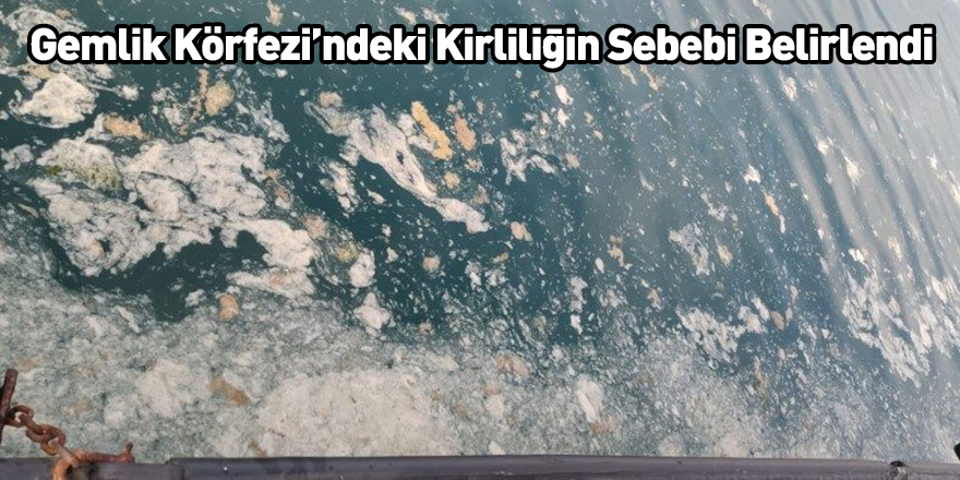 Gemlik Körfezi'ndeki Kirliliğin Sebebi Belirlendi