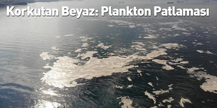 Korkutan Beyaz: Plankton Patlaması