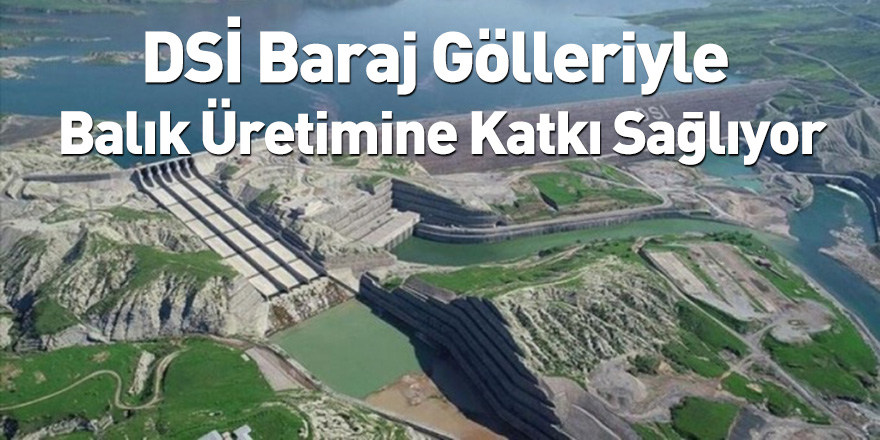 DSİ Baraj Gölleriyle Balık Üretimine Katkı Sağlıyor