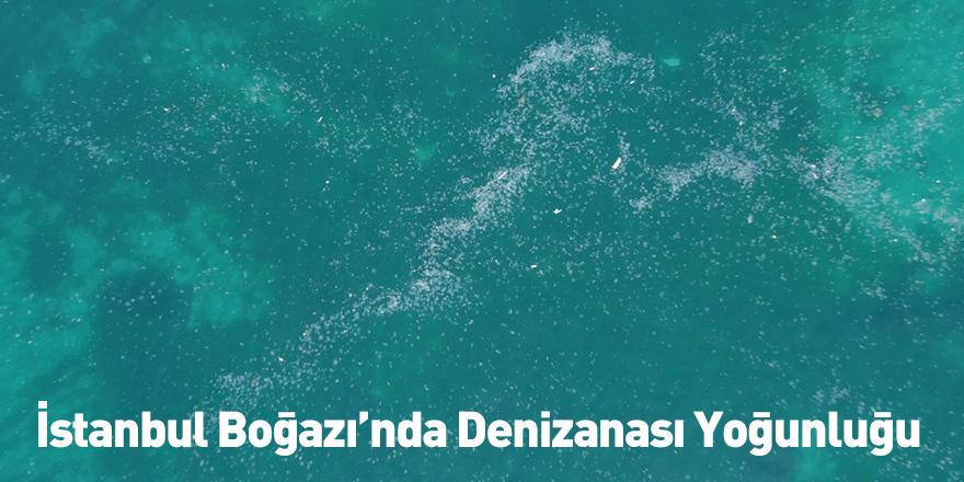 İstanbul Boğazı'nda Denizanası Yoğunluğu