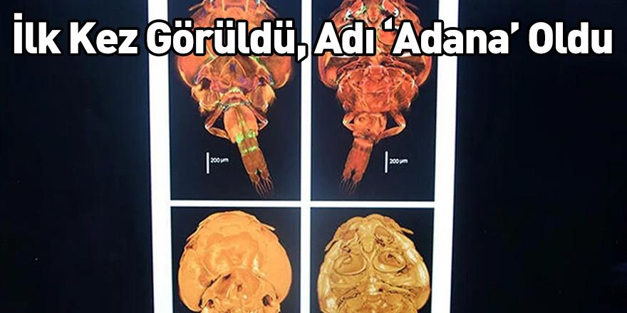 İlk Kez Görüldü, Adı 'Adana' Oldu