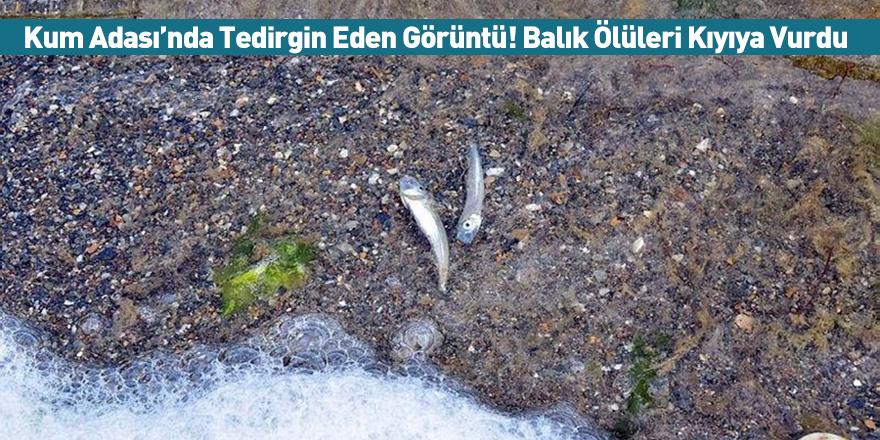 Kum Adası'nda Tedirgin Eden Görüntü! Balık Ölüleri Kıyıya Vurdu