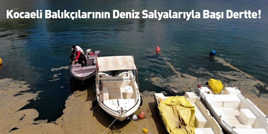 Kocaeli Balıkçılarının Deniz Salyalarıyla Başı Dertte!