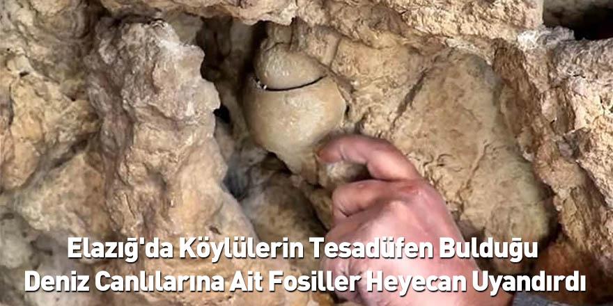 Elazığ'da Köylülerin Tesadüfen Bulduğu Deniz Canlılarına Ait Fosiller Heyecan Uyandırdı